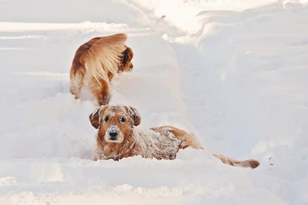 Hund Skiurlaub