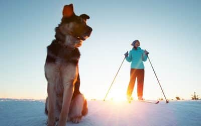 Skiurlaub mit Hund